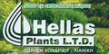 HELLAS PLANTS LTD